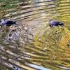 秋色の中を泳ぐ