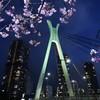 河津桜と中央大橋