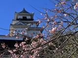 掛川城と枝垂れ梅