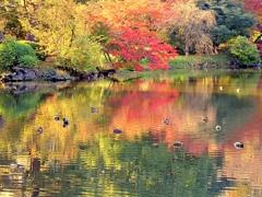 鴨の集まる中の池