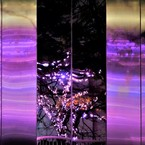 SONY DSC-RX100で撮影した(冬の桜3)の写真(画像)