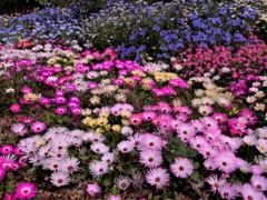 花の咲き乱れる花壇