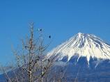 新富士駅の富士山