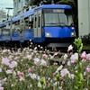 昼咲月見草と世田谷線