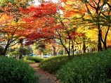 晩秋の日比谷公園