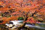 鮫川村の紅葉