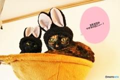 3月3日はウサギの日~!(^^)!