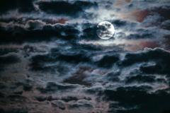 満月を見上げ ♪