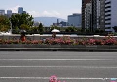 花の咲く淀屋橋