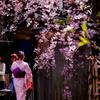 祇園巽橋の桜