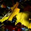 秋彩に染まる