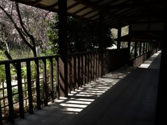 本土寺の渡り廊下