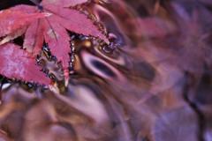 流れ行く秋