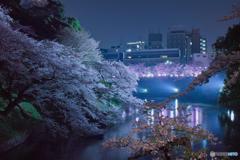 2018 千鳥ヶ淵公園の桜