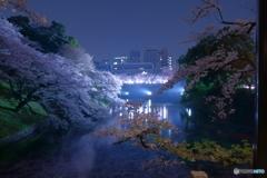 2018千鳥ヶ淵公園の桜2
