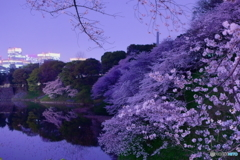 2018千鳥ヶ淵公園の桜3