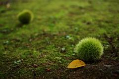 強い風と秋の気配