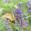 蝶の季節(4)