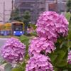 チンチン電車(1)