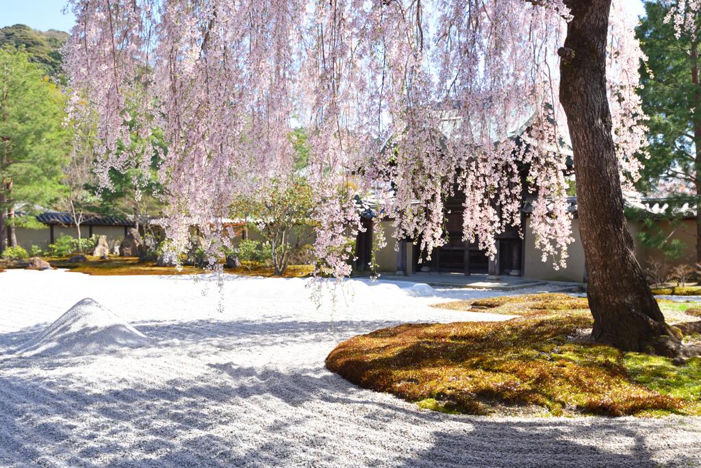 方丈前庭 春景色