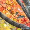 紅葉の日本庭園40