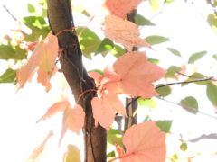 秋色探し16