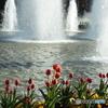 上野公園・噴水広場10
