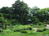 日本庭園17