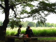 昭和記念公園・秋桜 17
