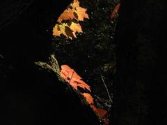 秋色探し18