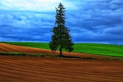 しっとりツリー