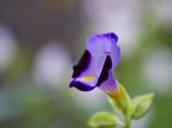 花のクローズアップ・8