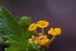 花のクローズアップ・5