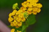 花のクローズアップ・3