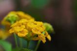 花のクローズアップ・2