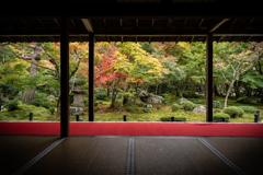 秋の圓光寺1