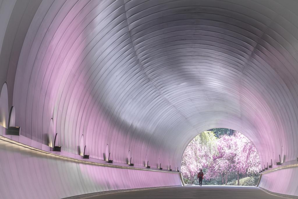 桜色のトンネル2