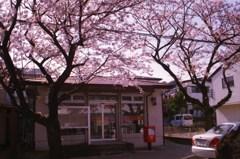 桜と郵便局舎