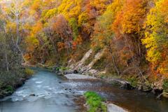 川と紅葉 そのに。
