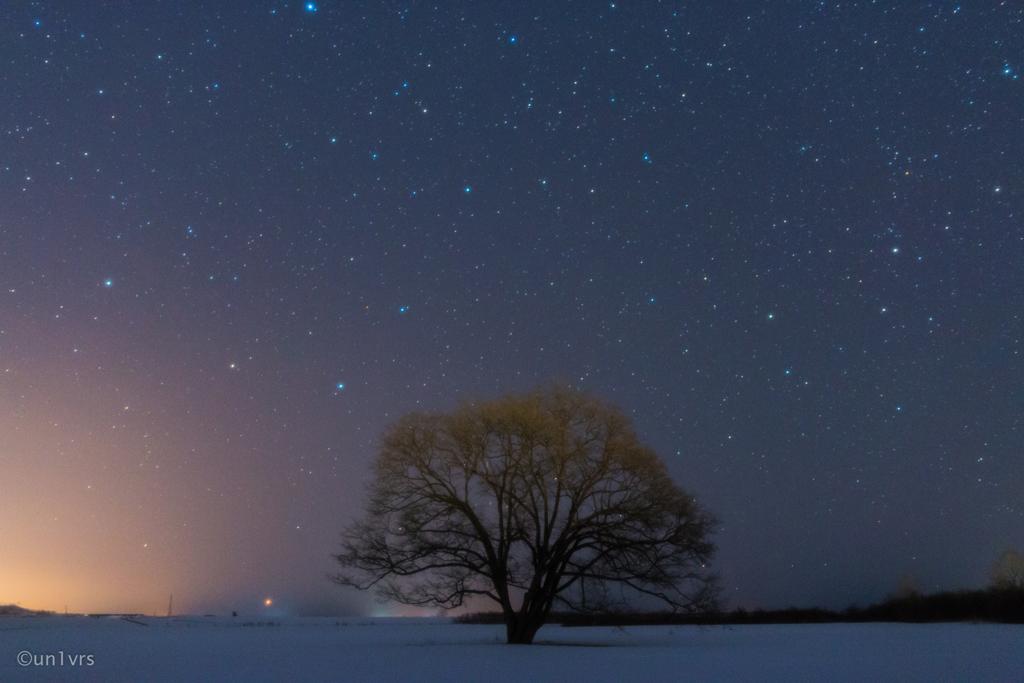 ハルニレの木(再)。