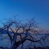 朽ちた木と夜明けと。