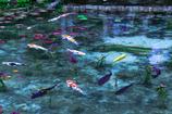 モネの池 ~再訪~