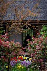 おばぁちゃん家の花壇