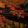 北陸の秋 ~山門~