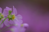 春を待ちわびる…