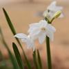 春を知らせる花