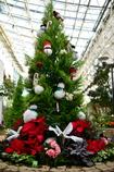 クリスマスツリー☆