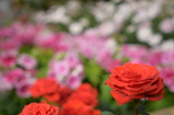 冬のお花畑♡