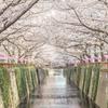中目黒桜トンネル