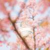桜からのぞいてみる
